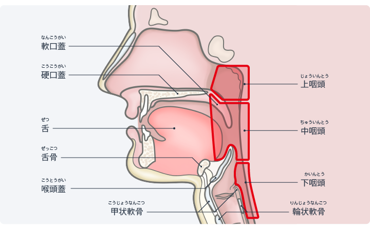 症状 慢性 炎 上 咽頭